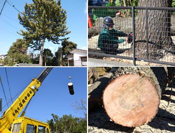 大木の伐採 施工事例
