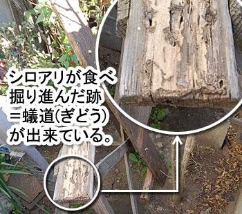 シロアリの消毒,駆除はグリーン・パトロール 神奈川県、茅ヶ崎市、藤沢市、鎌倉市、横浜市 シロアリを招く格好のエサ