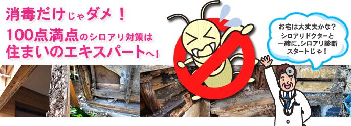 シロアリ(白蟻)の消毒,駆除