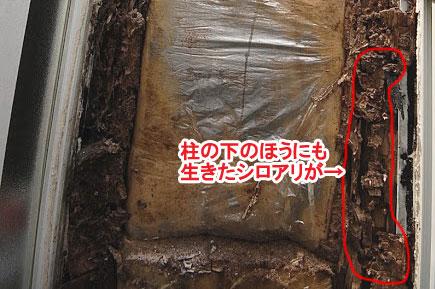 シロアリ被害施工事例 神奈川県 茅ヶ崎市 鎌倉市 藤沢市 横浜市