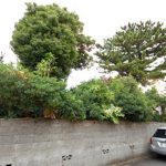 神奈川県藤沢市N様 大木の伐採 危険ブロック塀改修施工事例